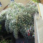 scorcio chiostro - fiori d'arancio